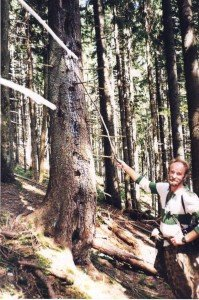 Дуплисті дерева потрібні для збереження біорізноманіття в лісах (на фото еколог Олександр Геревич). Фото Олега Листопада